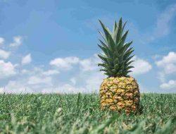 Benefits of Pineapple Fruit Pineapple for Body Health